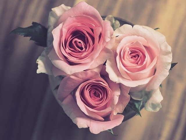 rose day ideas